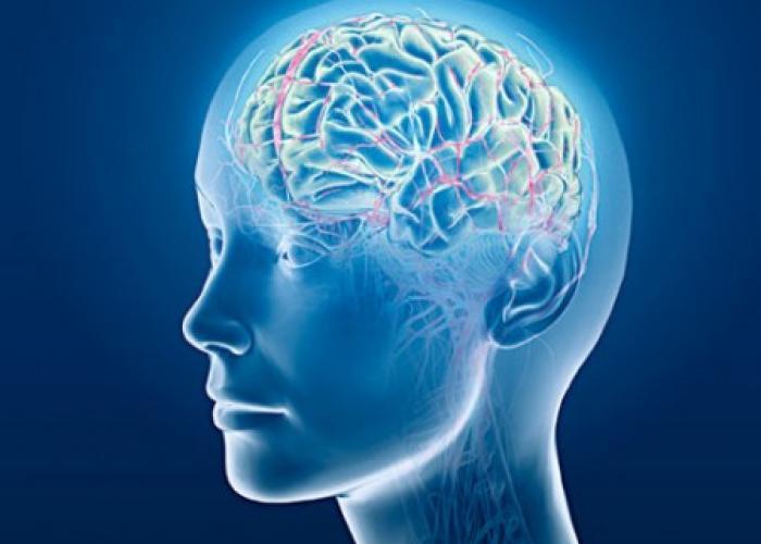neironnye svyazi eto